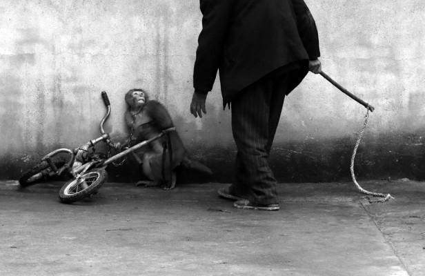 Yongzhi Chu. Mono es adiestrado en un circo chino.