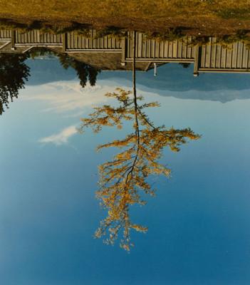 Rodney Graham. Tree on the Former Site of Camera Obscura (Árbol en el antiguo lugar de la cámara oscura), 1996.