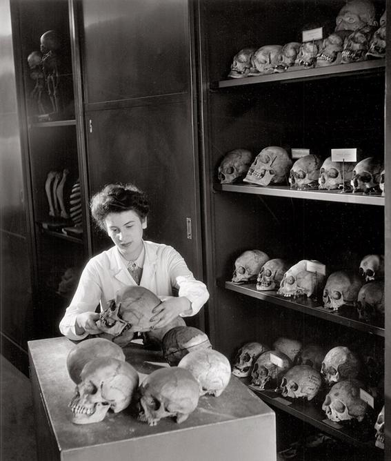 Robert Doisneau. L'armoire aux cranes, Musée de l'homme, 1943