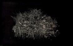 Muriel Moreau. Nuit. Finalista premio 2015.