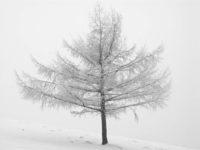 Imanol Marrodan, Frozen Trees