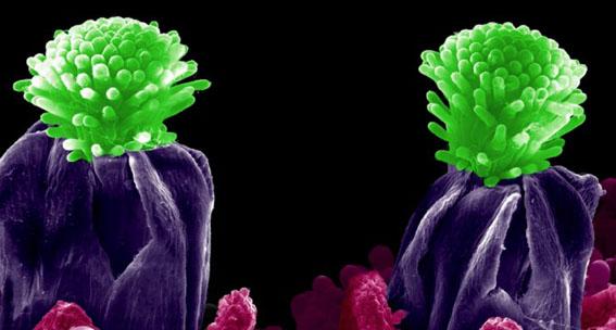 Microscopía